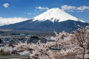 Mt Fuji & Cherry Blossom, Japan