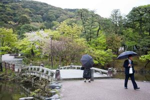 Umbrellas in the park, Kyoto, Japan